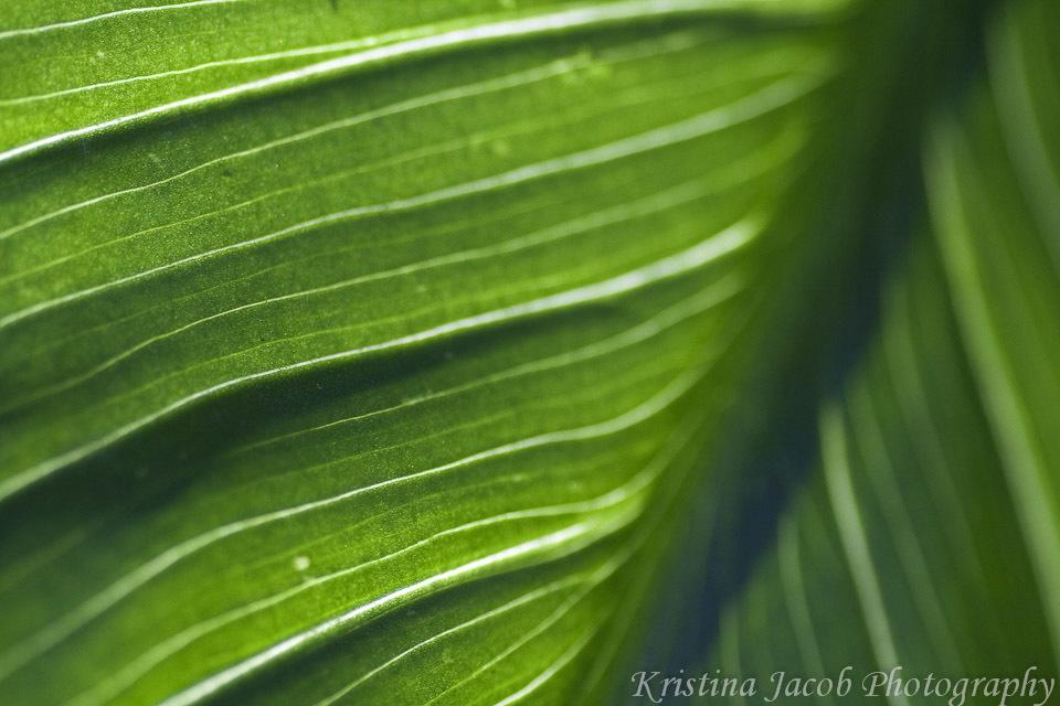 Kristina Jacob photography green leaf