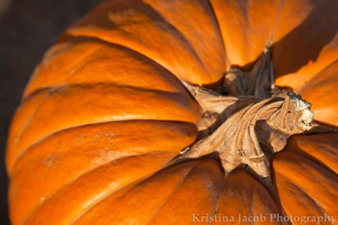 A resident pumpkin of Forneris Farms, Mission Hills, CA.