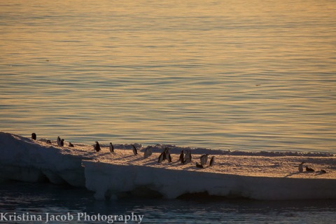 Chinstrap penguins use an ice floe to relax and soak up the Antarctic sunset.